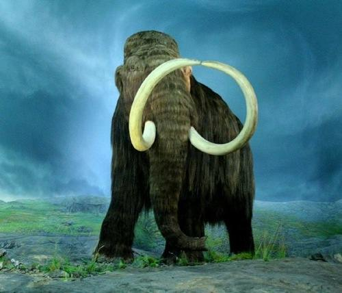 Mammoth Tusks